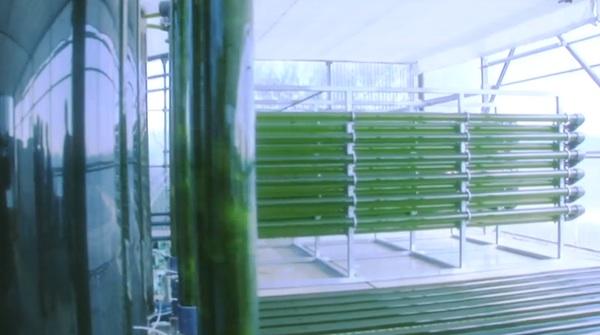 bioreactor tubes